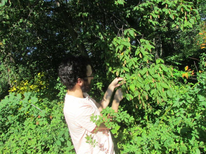 Biology Major, Nicholas Kremp, studying vegetation to determine what type of plant species are present.