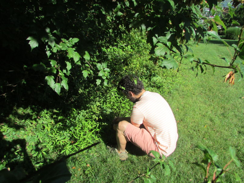 Kremp looking at ground vegetation